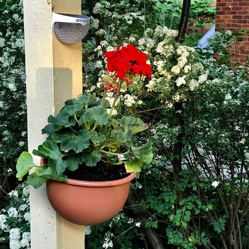 When the light is right Plant Growth Potted Plant Nature Flowering Plant Flower No People