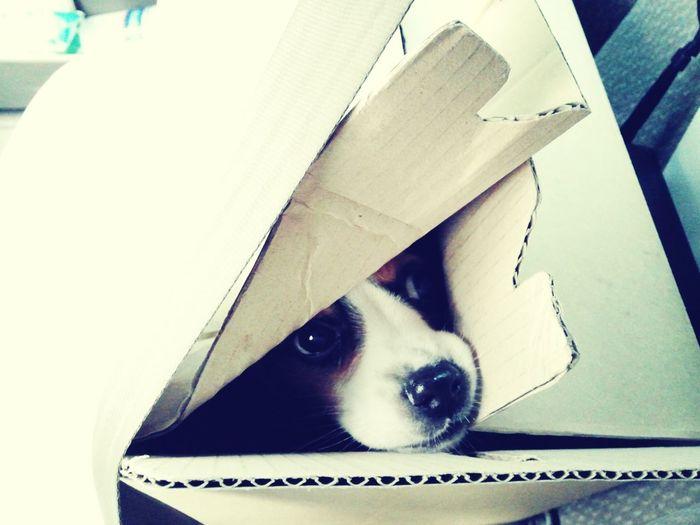 Korea Photos Beagle Pets Dog New Friends