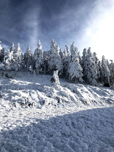 Snow Winter Cold Temperature Nature Tranquility Beauty In Nature Tranquil Scene Sky Scenics Weather Day Outdoors Landscape No People Sunlight Tree Cloud - Sky