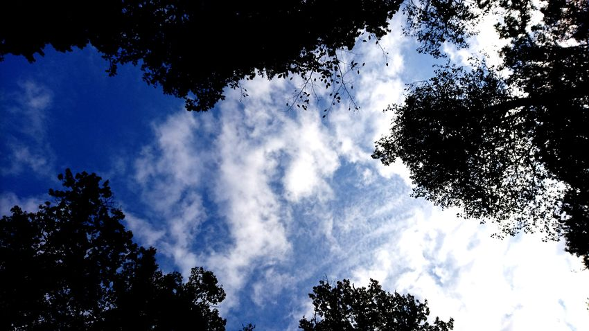 Nuages d'octobre Tree Low Angle View Sky Nature Outdoors Cloud - Sky Day Forest No People Blue Beauty In Nature Branch Perspectives On Nature
