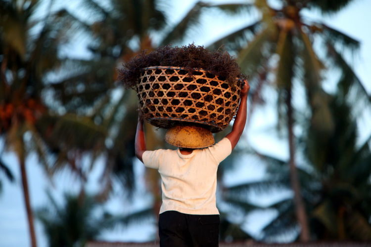Rear View Of Man With Basket Walking Against Palm Trees