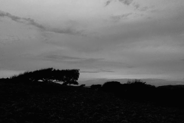 .::One Tree Hill::. MADE IN SWEDEN Intense Nothingness Minimalobsession Minimalism Dark Black And White Excellence Melancholic Landscapes Landscape_Collection Landscape Tree