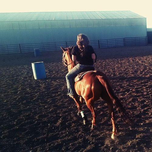 A Summer Evening Horsebackride Quarter Horse Sorrel Rescue Horse Arena