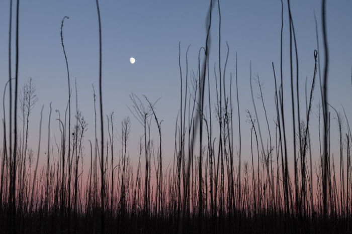 Clearing Full Moon Shades Twilight Beauty In Nature Clear Sky Dryness Emptyness Grass Growth Low View Minimal Minimalism Moon Nature No People Outdoors The Week On EyeEm Scenics Shades Of Blue Shades Of Sky Sky Sunset Tranquil Scene Tranquility