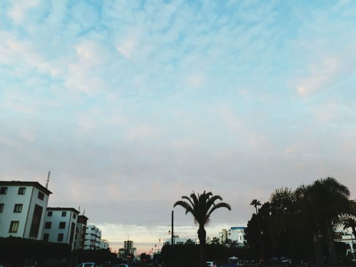 Tree Cloud - Sky City Palm Tree Sky Outdoors Travel Destinations No People Multi Colored Day Nature Beauty In Nature Cityscape Building Exterior Architecture Sunset Rabat Morroco❤ Twarga Rabat City ❤❤ Medina EyeEmNewHere Samsun Be. Ready. ☃ City Tree