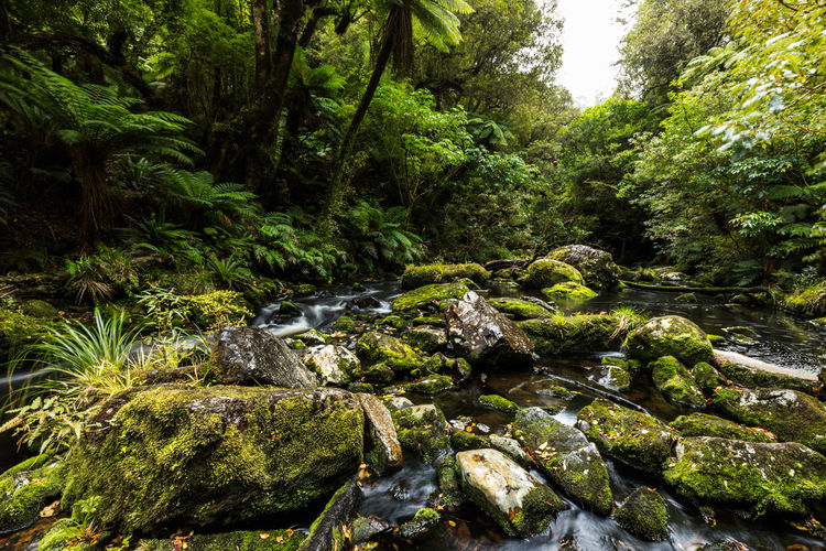 EyeEmNewHere The Week On EyeEm Trees Beauty In Nature Day Fern Forest Green Color Growth Lush Foliage Moss Nature No People Outdoors Rock - Object Scenics Stone Tranquil Scene Tranquility Tree Water Lost In The Landscape