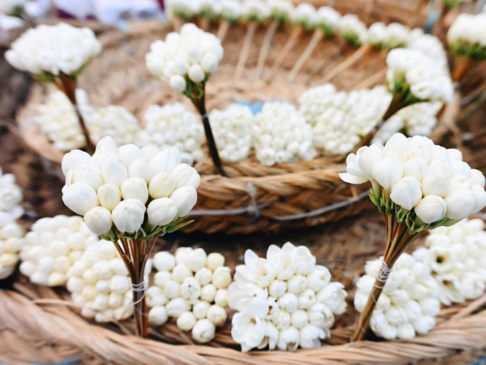Close-up of white flowering plant in basket
