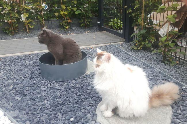 Cats Of EyeEm Cats Katzen Noah Ulala Two Is Better Than One