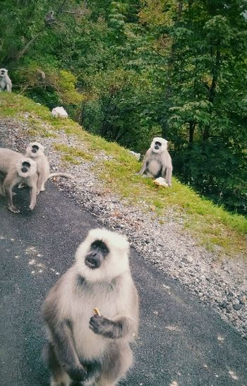 High angle view of langurs on road