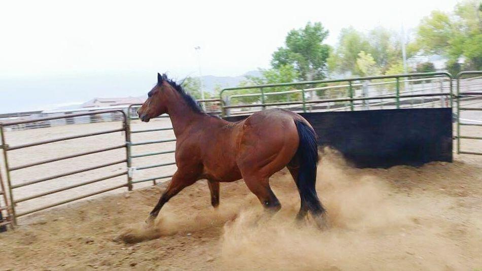 Dust Indie Running Horse