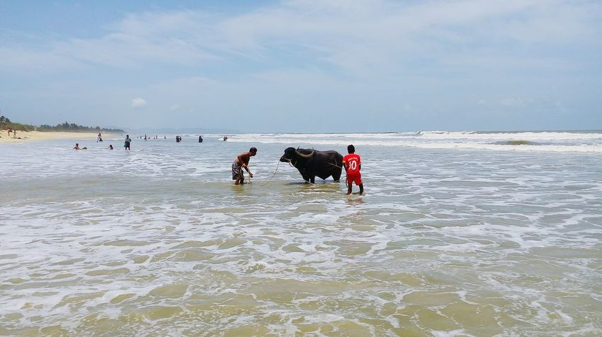Hello World Check This Out Beach Animal Bathing Buffalo PeopleFine Art Photography Waves Nature Beach Photography Adventure Club Fine Art Photograhy Foamy Waves Beauty India Goa Colvabeach Beautiful View Showcase July
