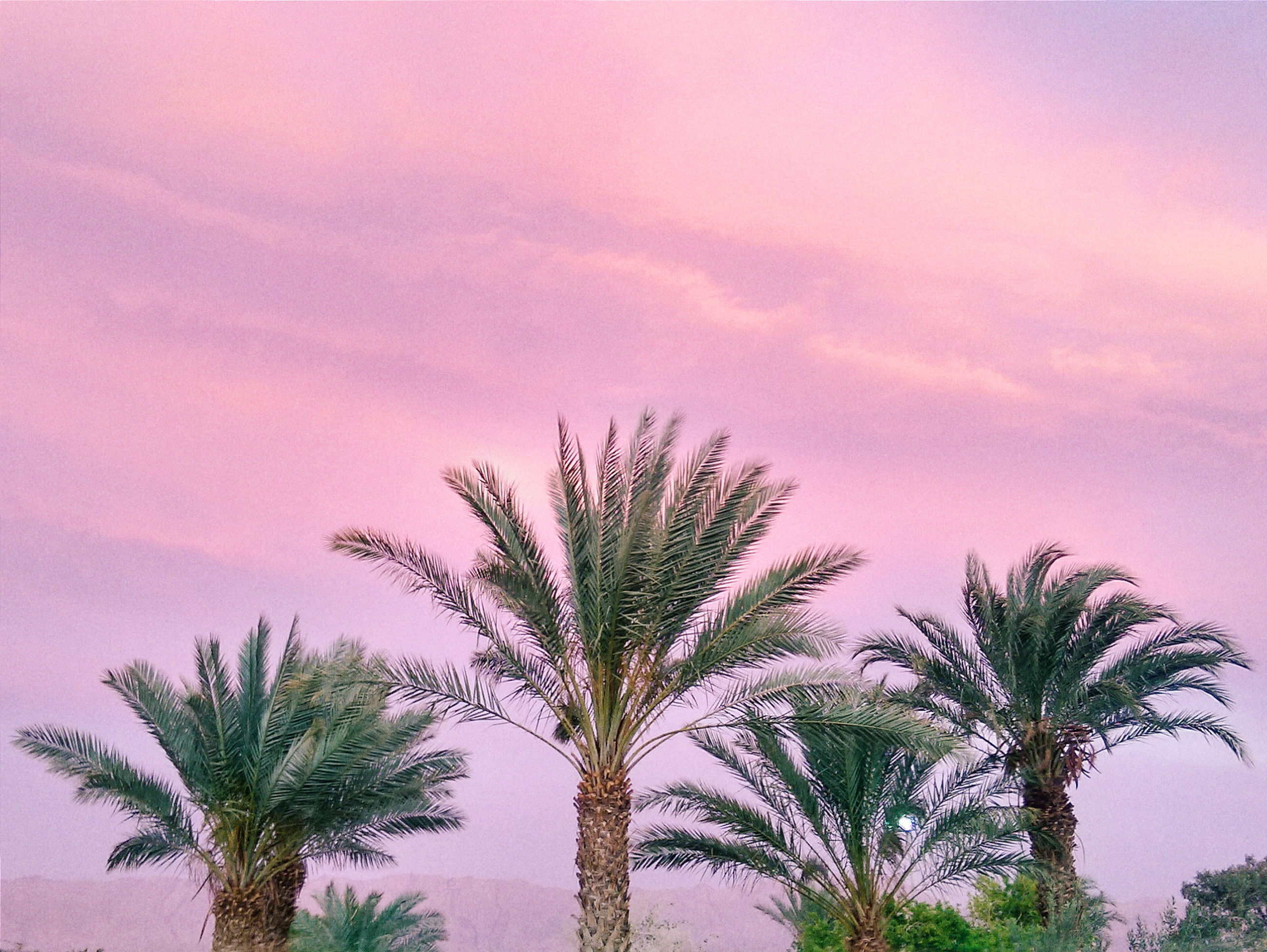palm tree, tree, sky, low angle view, tranquility, growth, beauty in nature, sunset, nature, scenics, cloud - sky, tranquil scene, silhouette, cloud, outdoors, idyllic, dusk, no people, cloudy, tree trunk