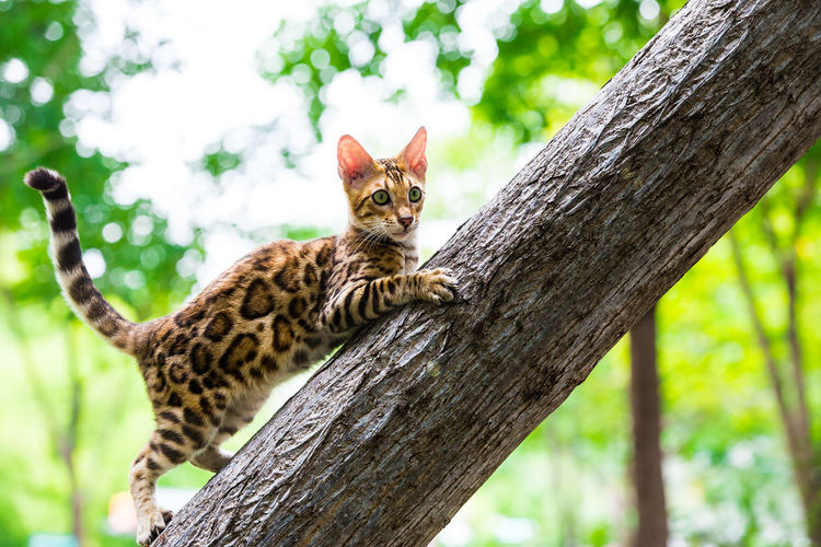 Cat on tree trunk