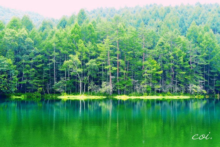 深緑の御射鹿池。時を忘れて見つてしまうほど美しい。 Emeyebestshot Japan 絶景 Traveling 休日 Hello World