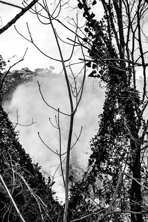 Open Edit Landscapes With WhiteWall Trees Branches Fog Smoke Monochrome Landscape Monochrome_life Blackandwhite Into The Wild Nature Hiking Forest Mountains