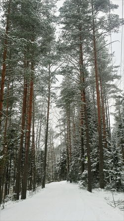 Winter Jalkala Nature Tree Snow Beauty In Nature Cold Temperature Forest Outdoors Landscape Sky Jalkala Green Color VSCO Cloud - Sky Scenics Snowing Lake Original Photo Ownphotos Ice