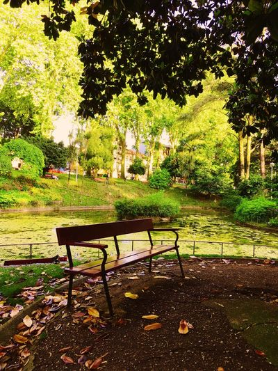 Plant Tree Park No People Nature Seat Growth Green Color Garden Grass Day