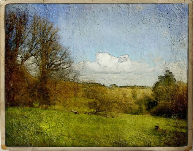Oil Painting Effect Oil Painting NatureField Sheep Sheep Meadow Meadow Cornwall Pastoral Oil Effect Landscape Landscape Art Paint Splatter Peaceful Nature Countryside