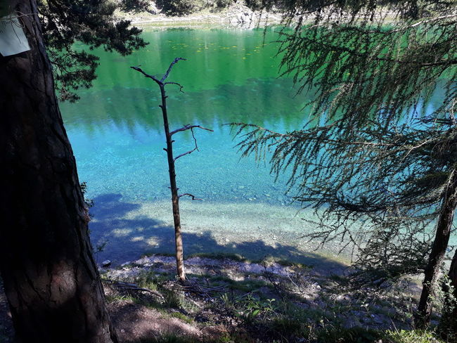 colorful water 💧 See Grün Natur Green Summertime Summer Steiermark Austria Grüner See Tragöss Holiday Sunny Vacations Vacation Styria Water Reflection Nature Day Outdoors Lake No People Tree Beauty In Nature
