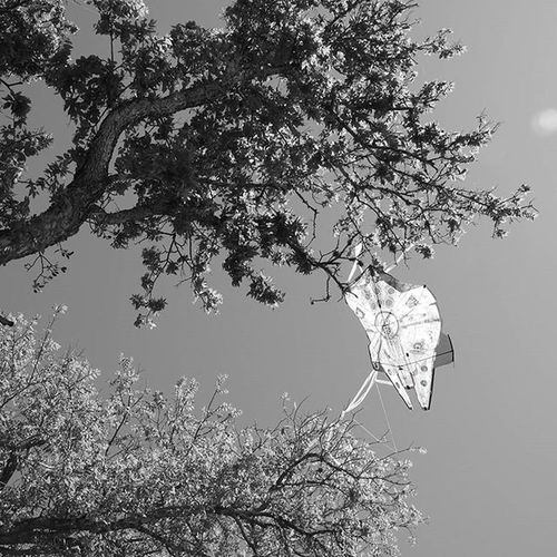 Star Wars Tragedy Black And White Photography Kite Flying Crescent Bend Nature Park