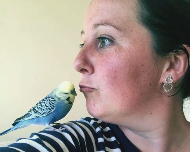 One Person Adult Close-up Budgie Bird Birdy Side-view, Mwah Kissds Pout Beautiful Animals  Blue Bird Tame Bird Tame Budgie Pet Pets