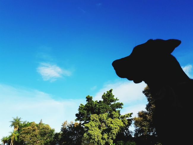 Tree Silhouette Low Angle View Blue One Animal Day Sky