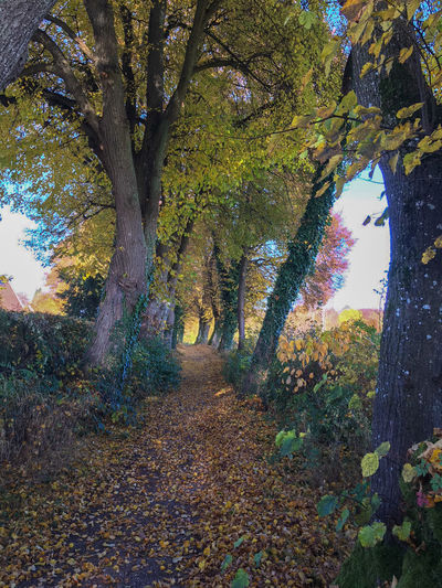 autumn alley Alley Autumn Autumn Collection Beauty In Nature Branch Change Day Fall Growth Leaf Nature No People Outdoors Plant Plant Part Scenics - Nature Tranquil Scene Tranquility Tree Tree Alley Tree Trunk Treelined Trunk