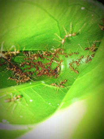 Antslife Ants Colony Antsworld Animals In The Wild Animals Planets Animals Planet