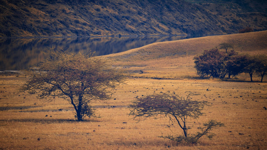 Scenic view of trees on field against sky, magadi, kenya