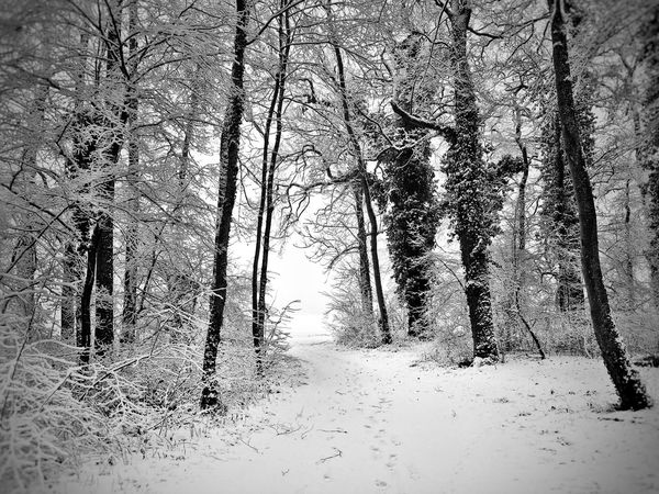 Monochrome Path Bare Tree Beauty In Nature Black And White Blackandwhite Branch Cold Cold Temperature Day Forest Landscape Nature Outdoors Scenics Snow The Way Forward Tranquil Scene Tranquility Tree Winter