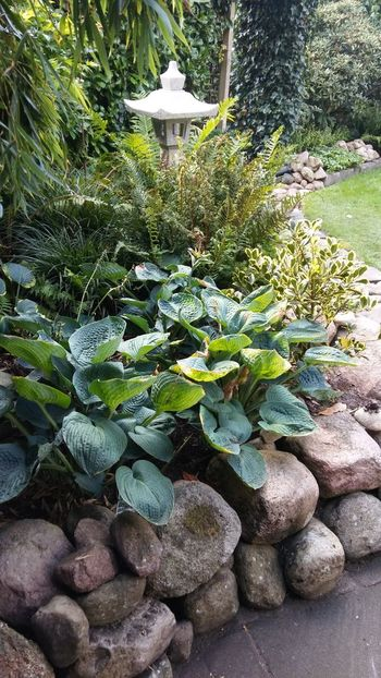 Stonegarden Steingarten Stone Wall Plant Green Color