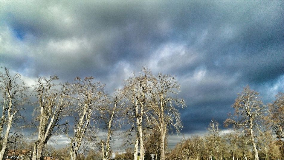 Trees Leaflesstree Leafless Clouds Clouds And Sky Weather
