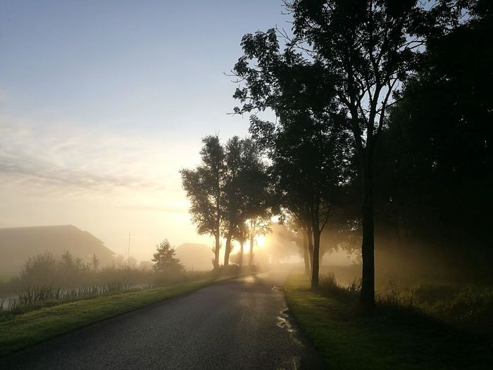 The way on my way to work.... 🤗 Tree Fog Autumn Sunlight Sunset Morning Road No People Sun Sky Outdoors The Way Forward Beauty In Nature Nature Scenics Landscape Rural Scene Day Grass Freshness Yellow Color HuaweiP9 Plus Photography The Week On EyeEm EyeEmNewHere Morning