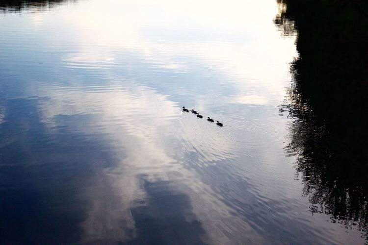Birds in water against sky
