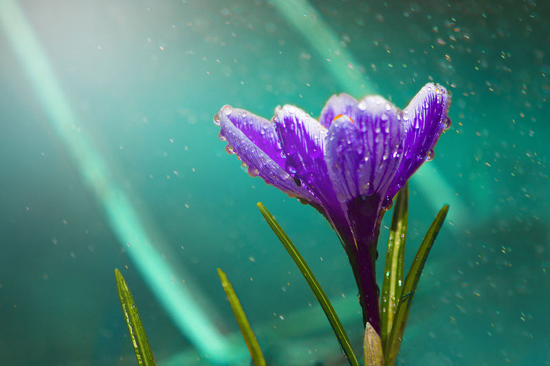 Beauty In Nature Blooming Close-up Day Drop Flower Flower Head Focus On Foreground Fragility Freshness Green Color Growth Leaf Nature No People Outdoors Petal Plant RainDrop Water Wet