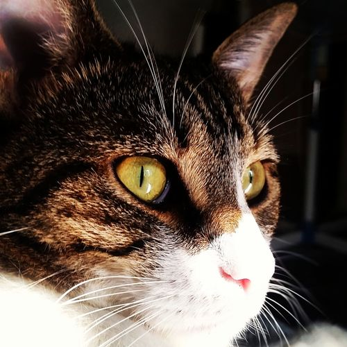Looking for Home Animal Tabby Green Eyes Looking Away Animal Head  Animal Photography Nofilter Noedit Cat Cateyes Gatto Eyes Kitty