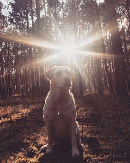 Dog Pets Sunlight One Animal Animal Themes Animal Sun Tree Nature