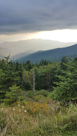 Clingmans Dome Great Smoky Mountains  Beauty In Nature Cloud - Sky Day Growth Landscape Mountain Nature No People Outdoors Scenics Sky Tranquil Scene Tranquility Tree