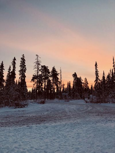 Sunset Sky Beauty In Nature Tree Scenics - Nature Tranquil Scene Tranquility Plant Nature Non-urban Scene No People Winter Water Land Snow Cold Temperature Idyllic Waterfront Orange Color Outdoors Coniferous Tree