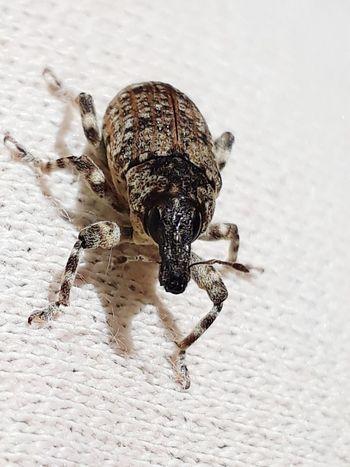 """Big Eye-2"" Insect With Big Eyes EyeEmNewHere Insect Theme Big Eyes Theme Insects  EyeEm Selects Insect Animal Themes Close-up"