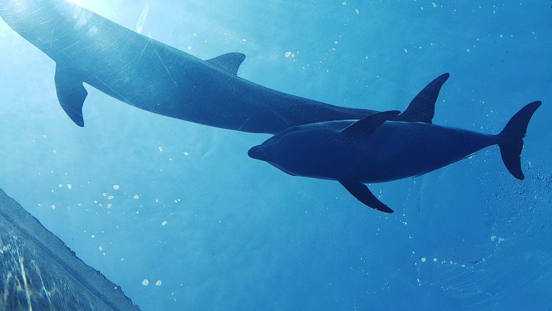 Animals In The Wild UnderSea Underwater Animal Wildlife Sea Sea Life Blue Swimming Fish Nature Scuba Diving Animal Themes No People Beauty In Nature Dolphins Mother And Son