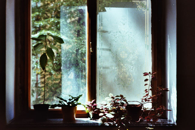 Plants Light Sunlight Sun Window Window Home Interior Close-up Window Sill Window Frame Shattered Glass