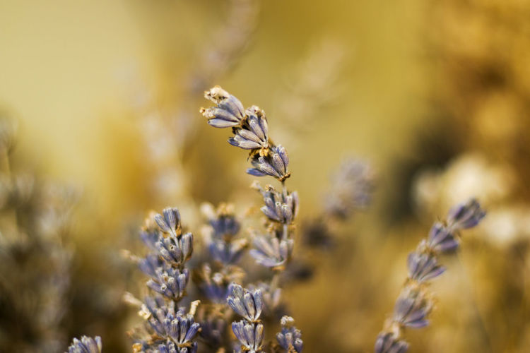 Dry plants and flowers macro, blur background and bokeh, yellow and orange colors mix.