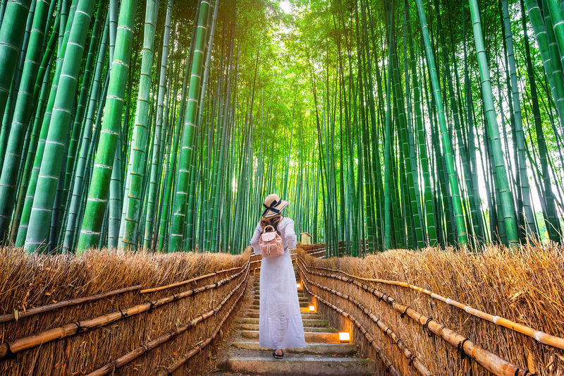 Woman walking at Bamboo Forest in Kyoto, Japan. One Person Tree Forest Full Length Land Women Adult Young Adult Plant Bamboo - Plant Green Color Standing Fashion Nature Bamboo Grove Bamboo Clothing Dress Beauty In Nature Hair Outdoors Hairstyle