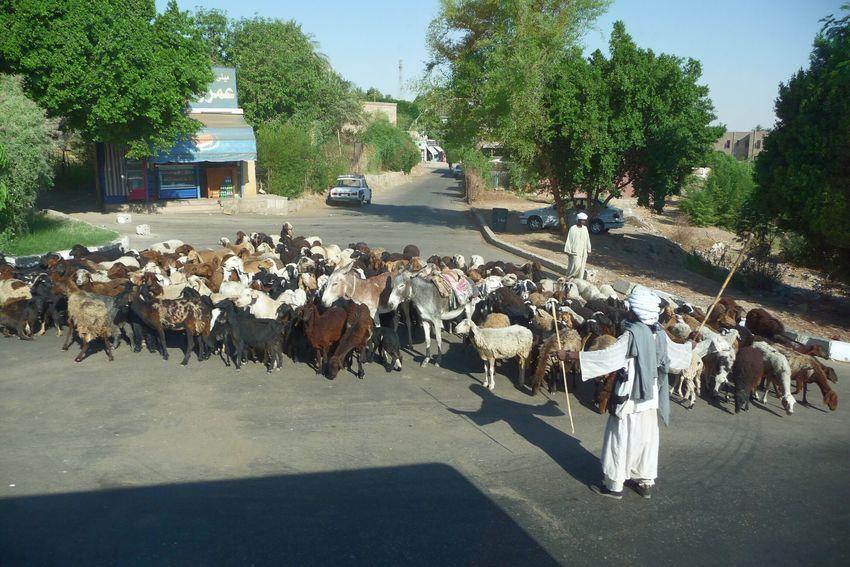 Egypte ´11 Route Arbre Jour Exterieur Vers L'avant Nature Vie Urbaine Mise Au Point Sélective