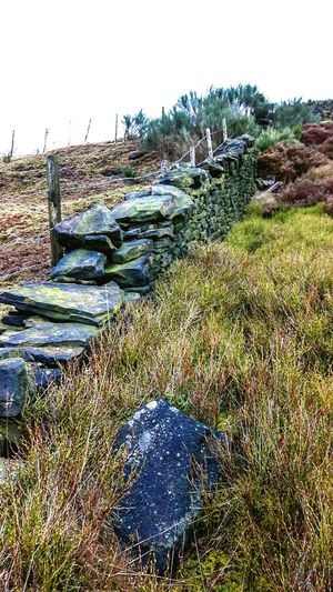 Wall Dry Stone Wall Pennines Yorkshire Mytholmroyd Heather