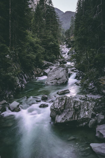 River flowing in forest