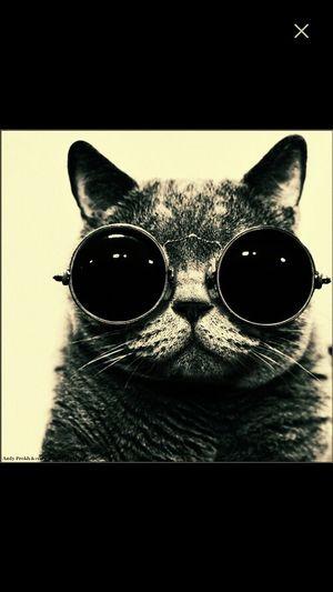 Cute! Cool Cat
