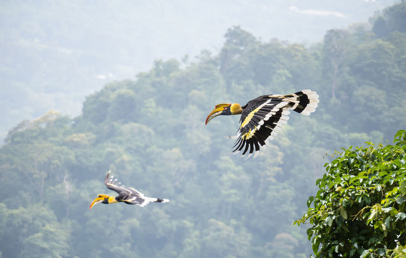 Side view of birds flying in forest