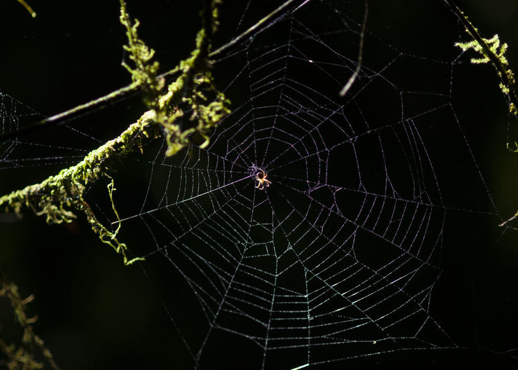 Cobweb at night